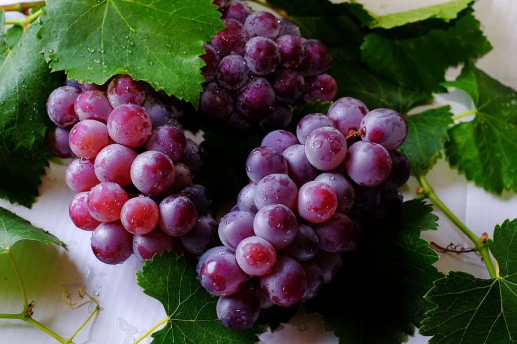 how to grow a small vineyard at home